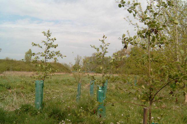 Reboisement forestier aux Dagueys